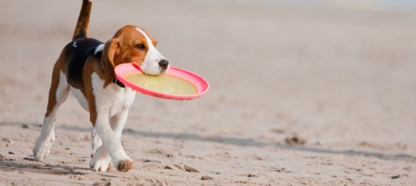 Summer Heat-Health Hazards for Pets