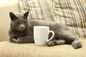 Cat on a sofa with white cup