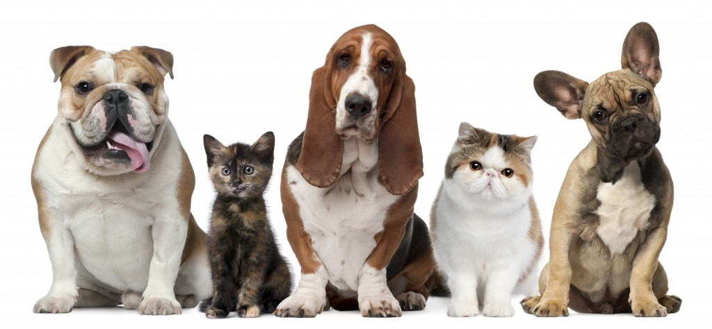 Interesting Research on Pets – What You Didn't Know